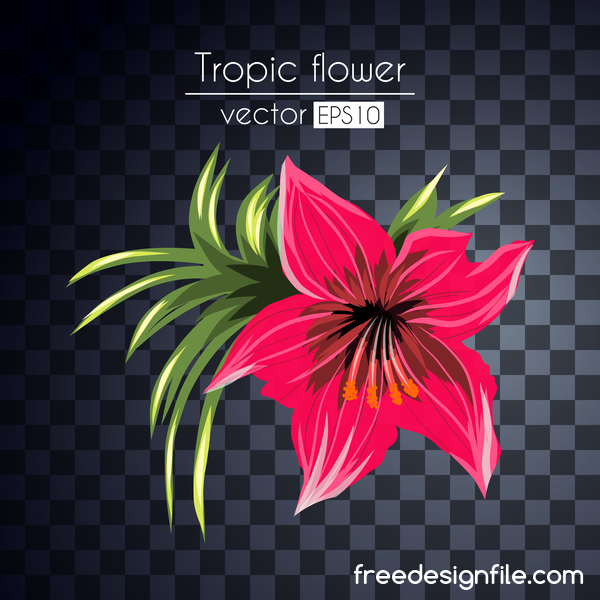 Vector tropical flowers illustration vector 02
