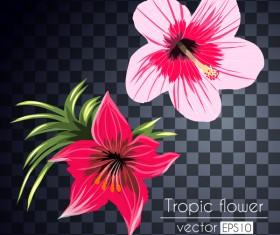 Vector tropical flowers illustration vector 03