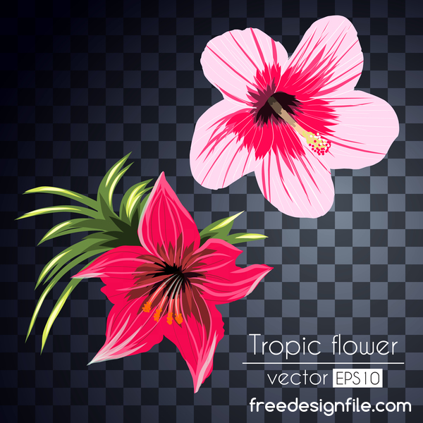 Vector tropical flowers illustration vector 03