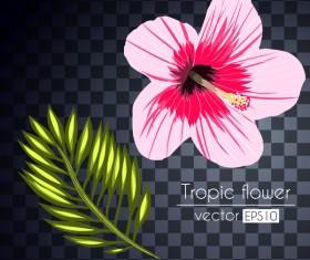 Vector tropical flowers illustration vector 04