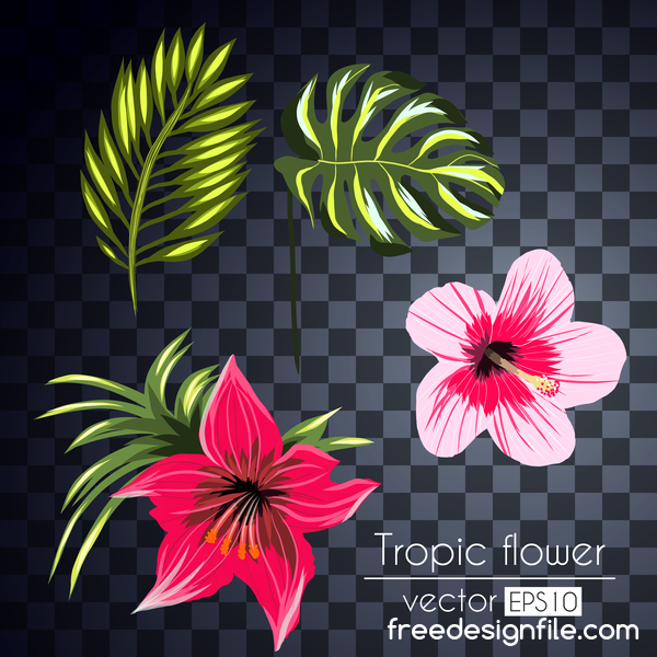 Vector tropical flowers illustration vector 05