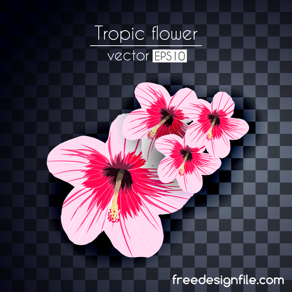 Vector tropical flowers illustration vector 06