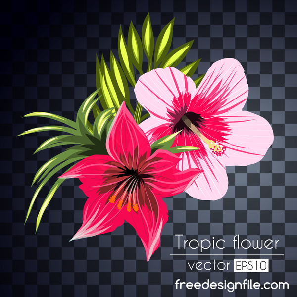 Vector tropical flowers illustration vector 07