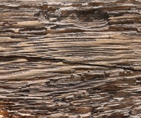 Weathered Wood Textures Stock Photo 08