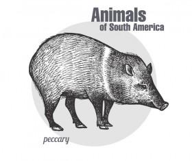 Wild boar hand drawing sketch vector