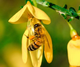 Yellow on the branches of the bees HD picture