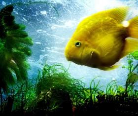 Yellow sea fish Stock Photo