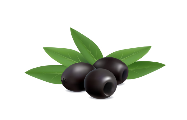 illustration of black olives on white background vector