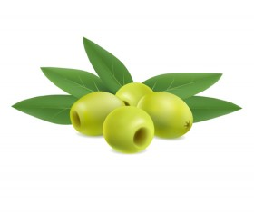 illustration of olives on white background vector