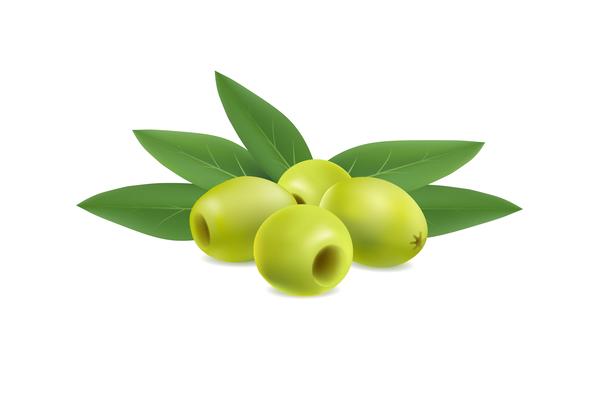 illustration of olives on white background vector
