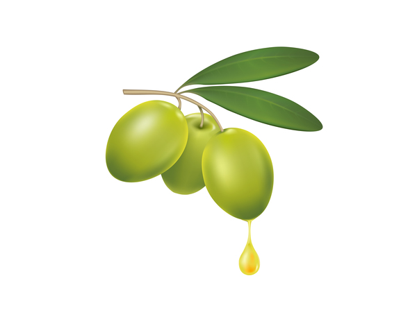 olive branch with a drop of olive oil vector