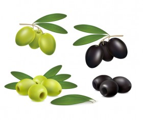 set olives on white background vector