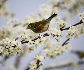 small sparrow on the branches of flowers Stock Photo