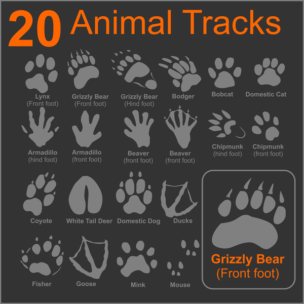 20 Kind animals tracks vector