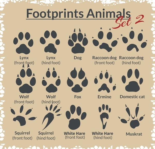 Animal footprints design set vector 03