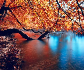 Autumn forest streams HD picture