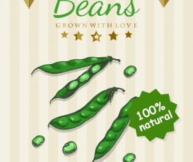 Beans poster template retro vector