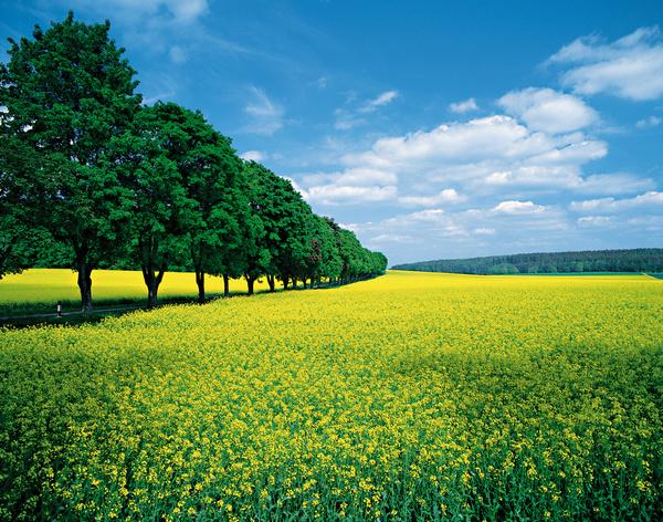 Beautiful Field Scenery Stock Photo Free Download