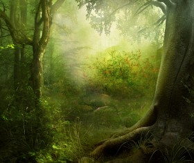 Beautiful mystery forest Stock Photo 03