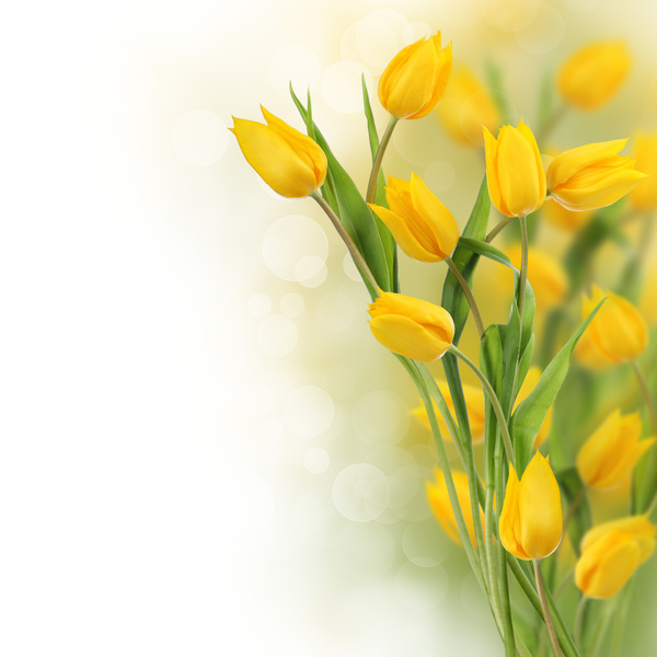 Beautiful yellow flowers stock photo free download beautiful yellow flowers stock photo mightylinksfo