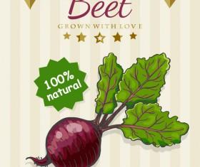Beet poster vector
