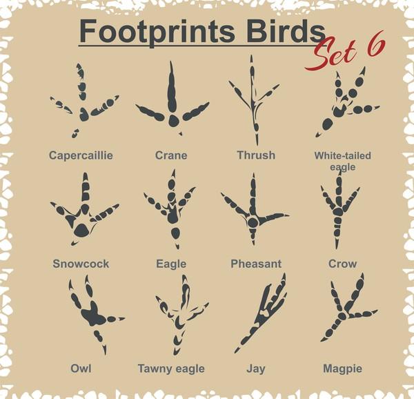 Birds footprints design set vector 02