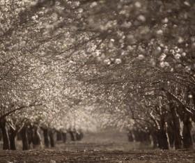 Black and white woods Stock Photo