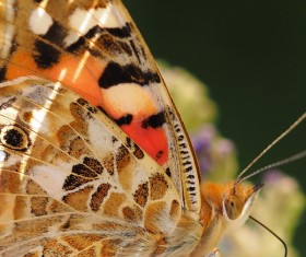 Butterfly macro photography HD picture