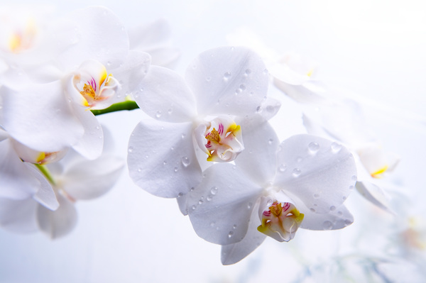 Image result for delicate flowers