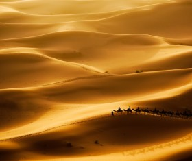 Desolate desert and camel on Stock Photo