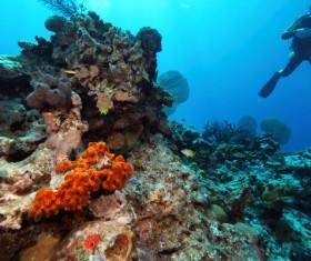 Diver underwater sightseeing Stock Photo