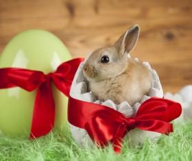 Easter Bunny Stock Photo 01