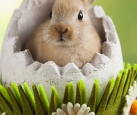 Easter Bunny Stock Photo 02
