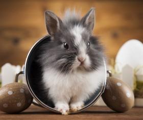 Easter Bunny Stock Photo 03