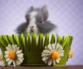 Easter Bunny Stock Photo 04