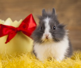 Easter Bunny Stock Photo 05