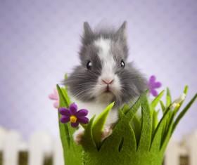 Easter Bunny Stock Photo 07