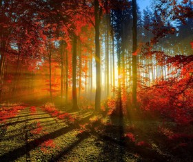 Forest sunset night photography HD picture