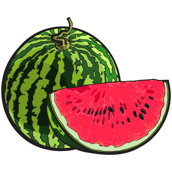 Fresh juicy watermelon with ripe vector material 03
