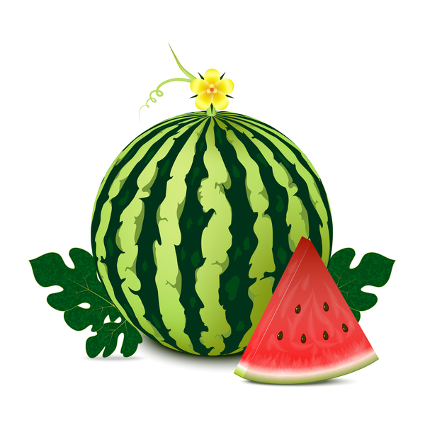 Fresh juicy watermelon with ripe vector material 04