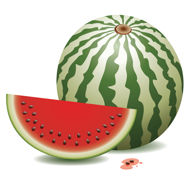 Fresh juicy watermelon with ripe vector material 05