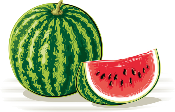 Fresh juicy watermelon with ripe vector material 07