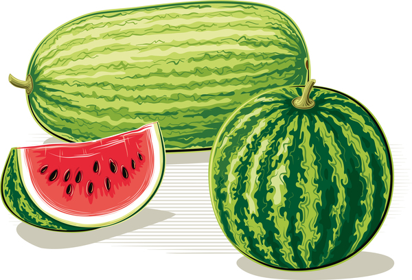 Fresh juicy watermelon with ripe vector material 10