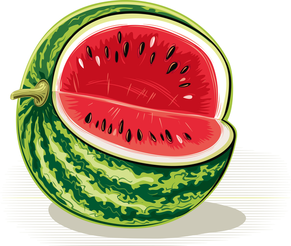 Fresh juicy watermelon with ripe vector material 11