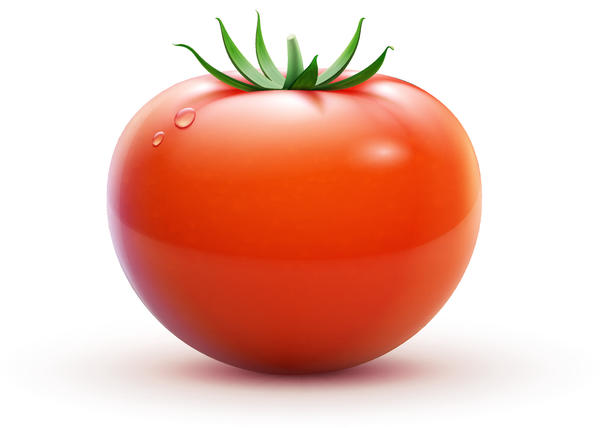 Fresh tomato illustration design vector 01