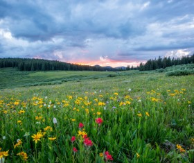 Full of wild flowers in the meadow Stock Photo