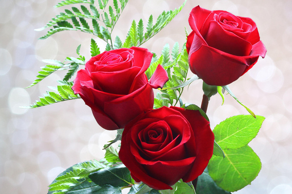 Green leaf red roses hd picture free download - Red rose flower hd images ...