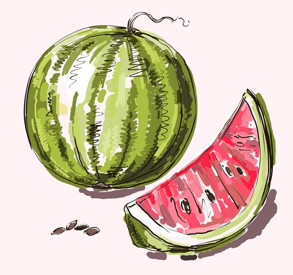 Hand drawn watermelon vectors