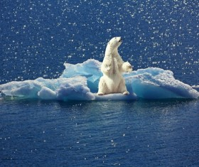 Ice floes polar bear Stock Photo