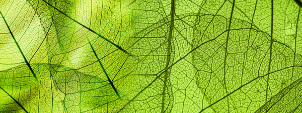 Leaf Textures HD picture 01